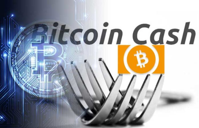 Latest Accurate Bitcoin Cash Review by besticoforyou